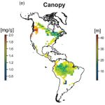 Forest canopy high in the Americas. From Simova et al 2019
